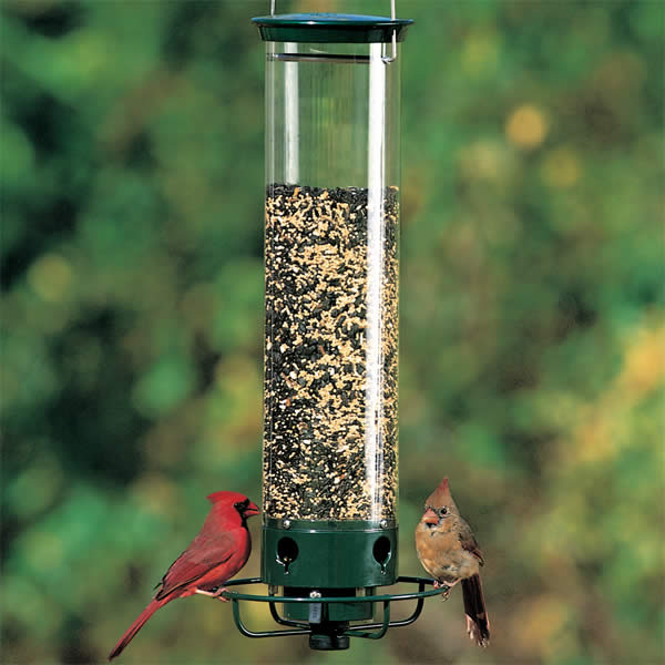 Attracting A Variety of Birds to Your Feeder
