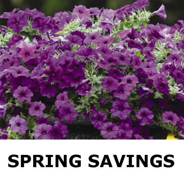 Spring Savings Going On Now!