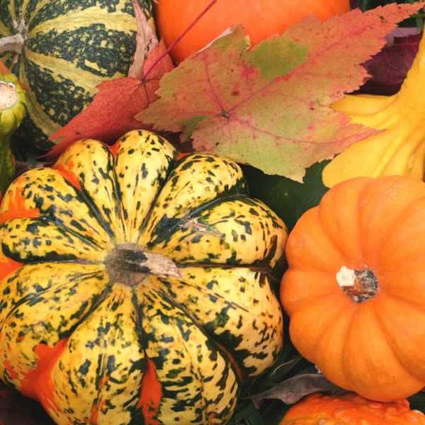 Pumpkins, Gourds & More!