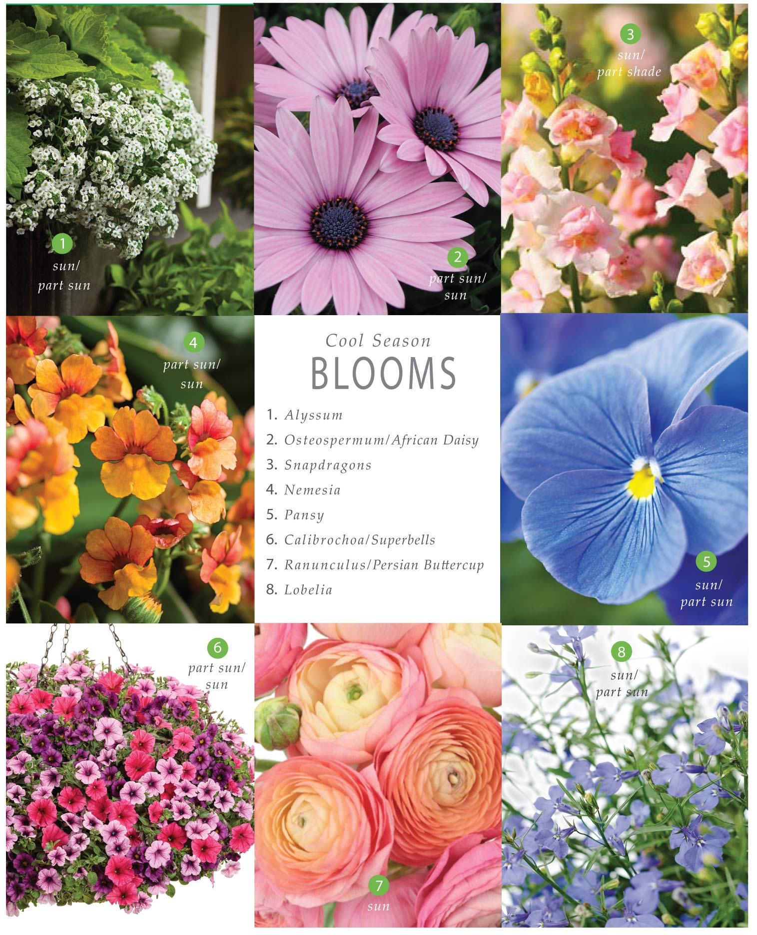Best of Cool Season Blooms