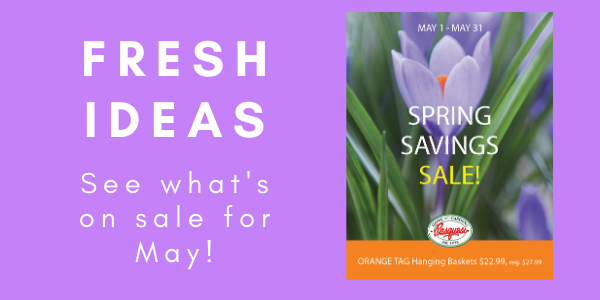 Spring Savings May2020 rect 1