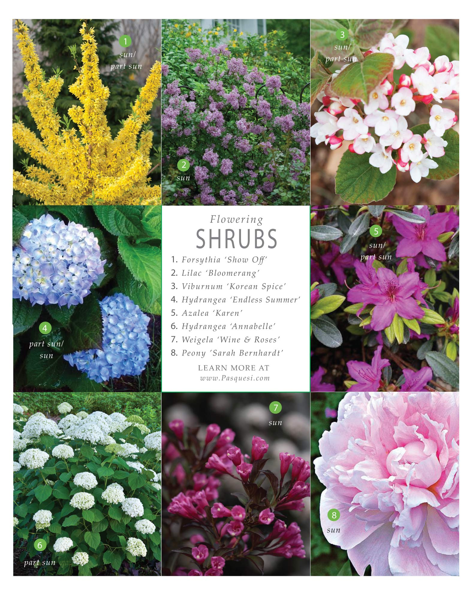 Best of Flowering Shrubs