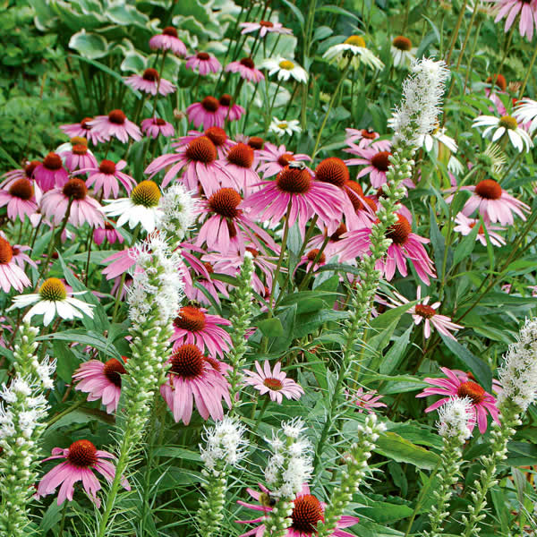 Melinda's Garden How-To: Bird & Butterfly Friendly Perennials