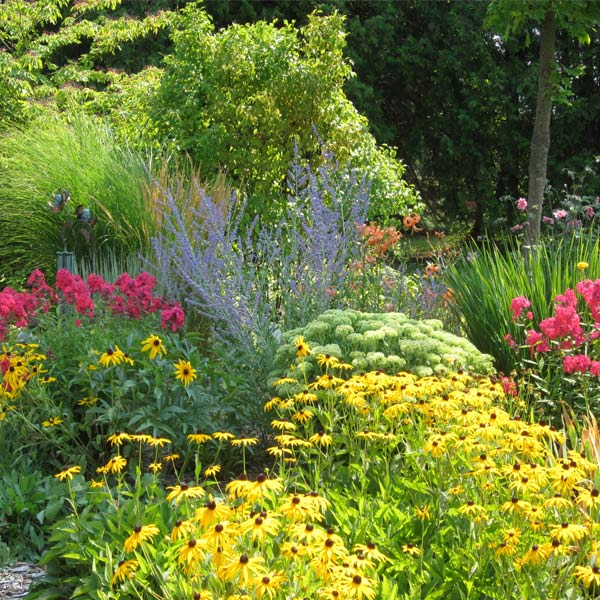 Melinda's Garden How-To: Perennials