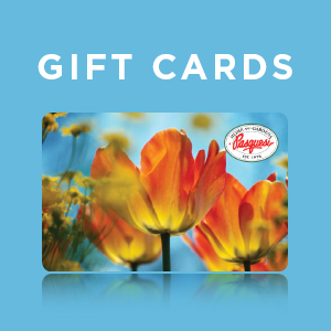 GiftCard-1x1