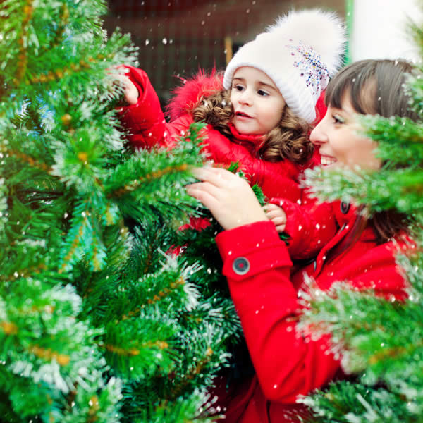 How to Care for a Fresh-Cut Christmas Tree