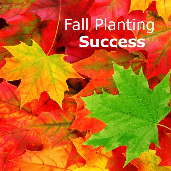 Melinda's Gardening How-To: Fall Planting Success