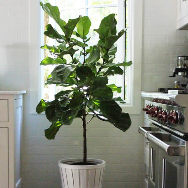 Melinda's Gardening How-To: Success with Indoor Plants