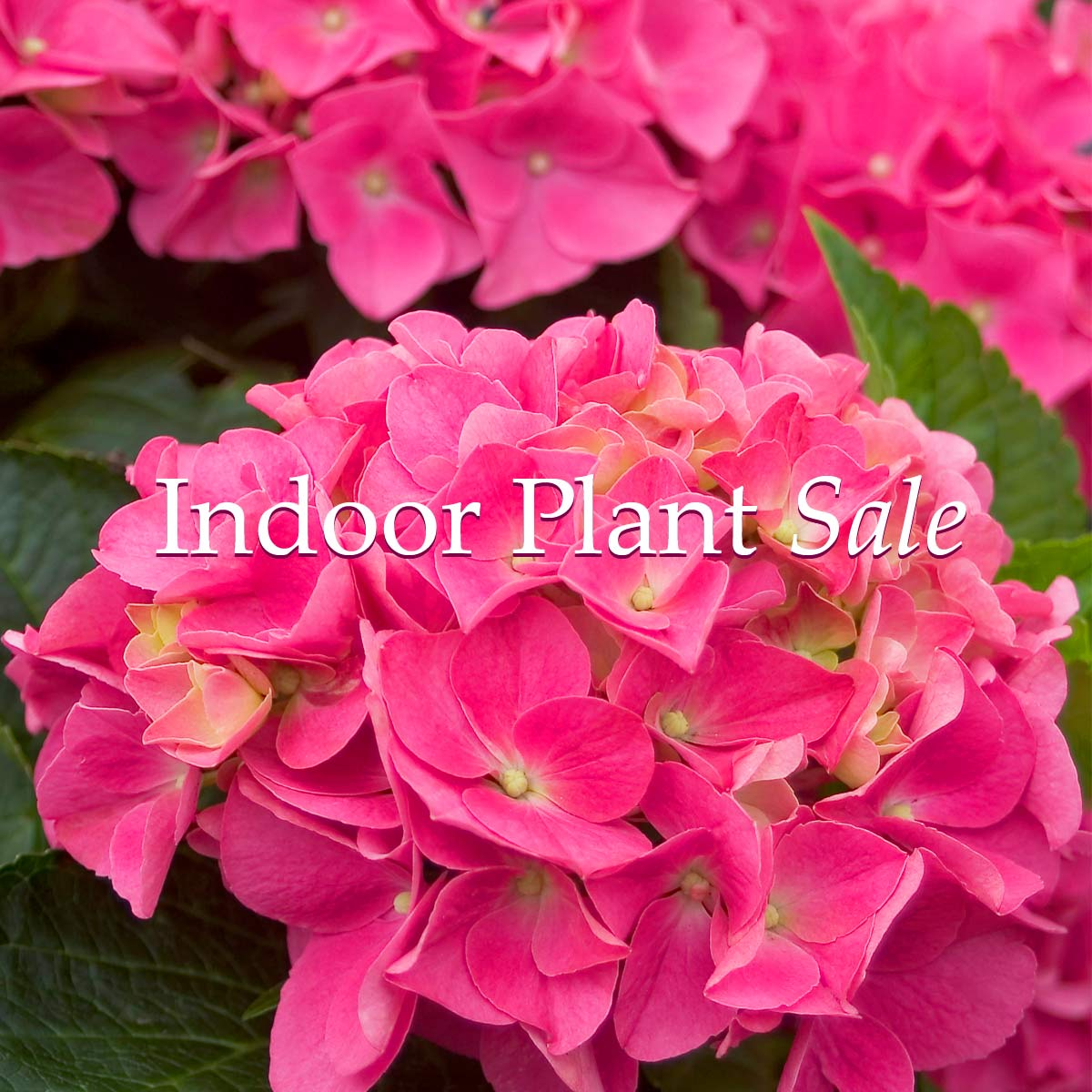 Indoor Plant Sale