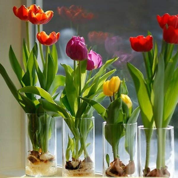 Gardening How To: Forcing Bulbs