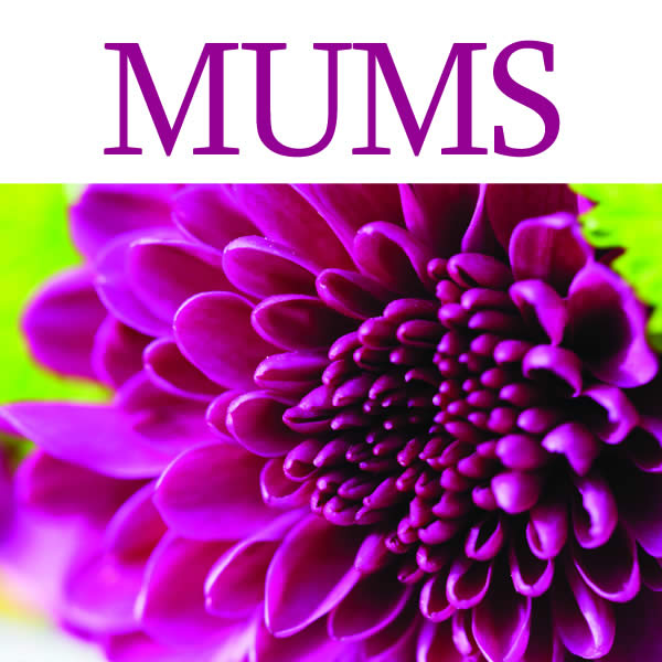 Low Maintenance Plant: Mums & Kale